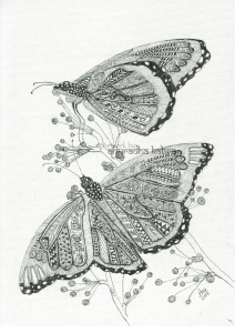 web-Butterfly pair