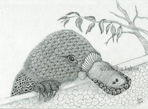 web-Platypus