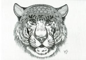 web-Tiger