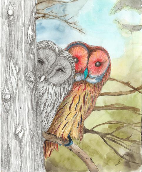 Yin-Yang-Owls.jpg
