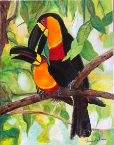 Channel billed Toucan